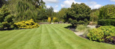 Beautifully shaped lawn  on which our maintenance experts took take care of